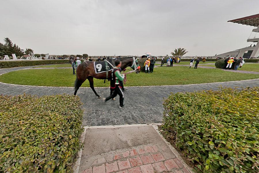 Şanlıurfa Hipodromu Ve At Yarışları